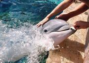 Dolphins ..my love