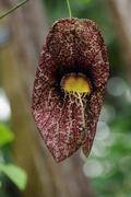 Bloedel flora