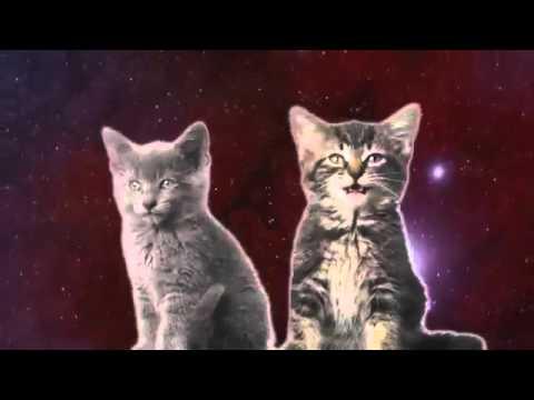Песня мяу, мяу исполнители два котёнка