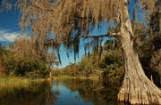 Wacissa River, Florida; photo credit: Florida Fish and Wildlife Conservation Commission