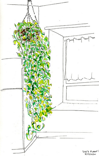 Didi's kitchen plant