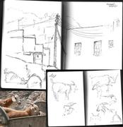 Haramel goats - quick sketches