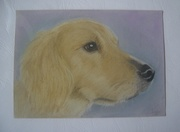 Lyn's pastel pencil pictures