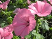 в моем саду.