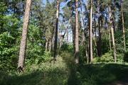 Добрый лес.