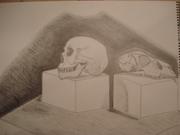 Human and Animal Skull