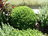 plantas medicinales y ar…