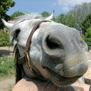 Paardenmensen in Frankrijk