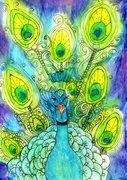 Peacock - work in progress