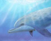 Dolphin Solo