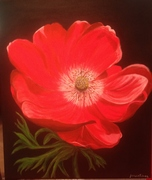 Red Anemone for Betsy