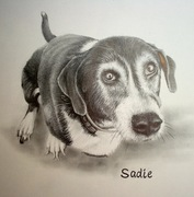 Sadie Pencil