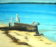 Pelicans at Golden Beach Caloundra - Oils in Private Collection