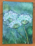 Queen Anne's Lace-ATC