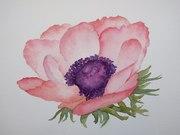 Anemone velvet