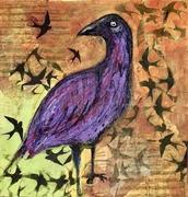 Ravens of India