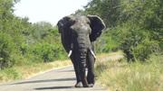 Elephant behind our car