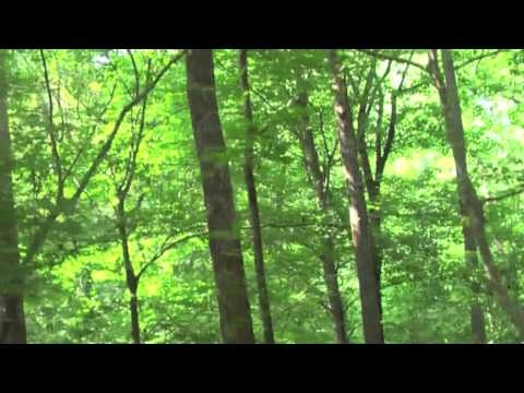 Forest and Fountains (With Music)
