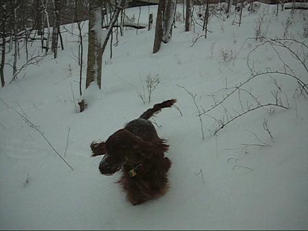 Wyatt in the snow again
