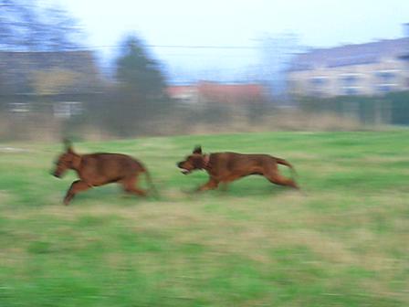 River and Nelli are having fun:)