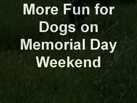 More Fun for Dogs on Memorial Day Weekend