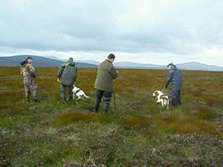 Field Trial Wicklow Mountains, Ireland