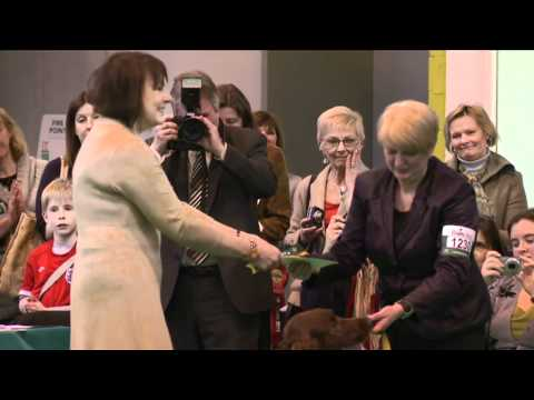 dfs Crufts 2011 - Best of Breed Irish Setter