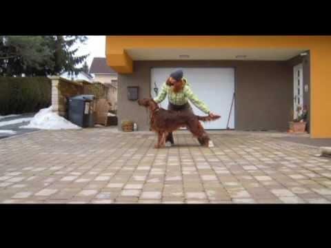 dog show training