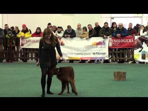 Simona a Maron, Dogdance Winter Show
