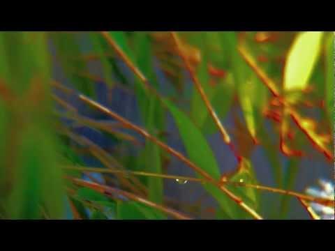Rain Dance - Marco Trochelmann - Contemporary Fujara Music