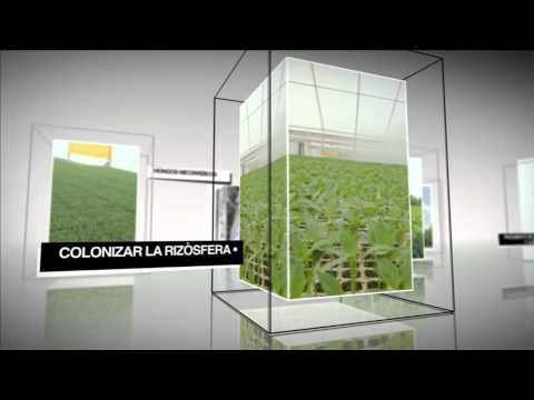 Video corporativo AgriBest