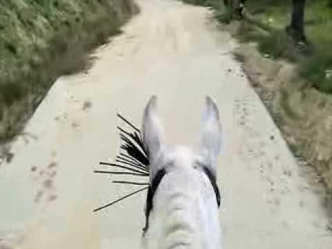 Europa Equitación al galope (1)