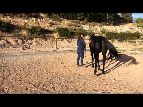 Cómo enseñar a tu caballo la impulsión