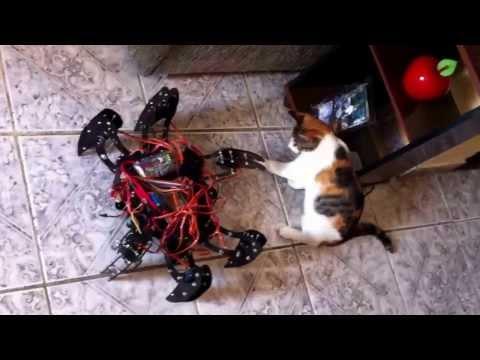 Gato vs Aranha parte 1