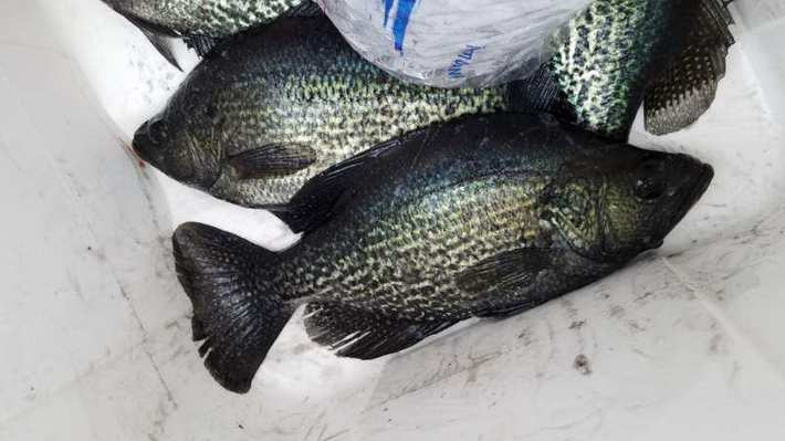 Big Crappie In Skinny Water.........April
