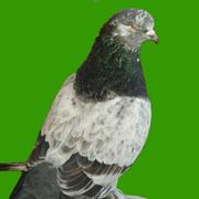 Birdie Newborn
