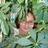 Beth Snowden
