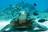 DonnaB (ship 11, div 282)