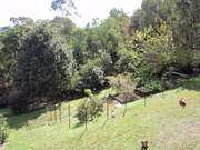 View of my veg garden with new fence