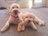 Betsey and Tera & Bo
