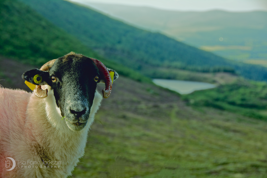 """""""The Vee""""-Knockmealdown Mountains"""