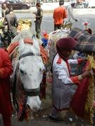 Marwari Horse at Dundlod Fort Heritage Hotel