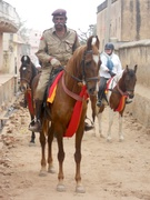 Marwari Horse at Dundlod Fort Heritage Hotel