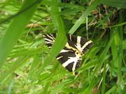 Biodiversity slideshow