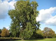 Tree Calendar - Trees