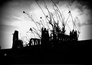 Whitby Abbey  Dark Sky