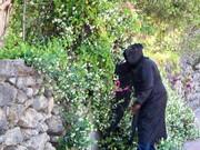 Prelude's Grim Reaper arriving on the scene.