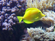 peixinho sorrindo
