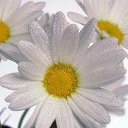 Minha flor preferida!