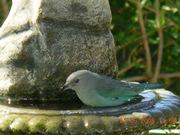 Flôres e pássaros 060